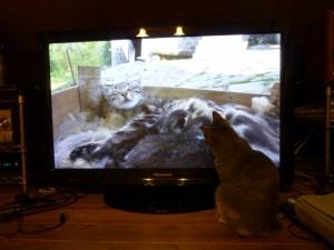 蘭ちゃんとテレビ1