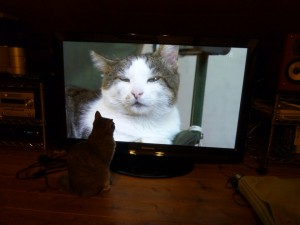 蘭ちゃんとテレビ2